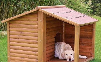 Как выбрать клетку или будку для собаки