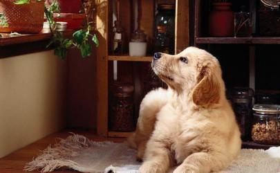 Быть или не быть собаке в доме?