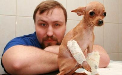 Переломы костей у собак