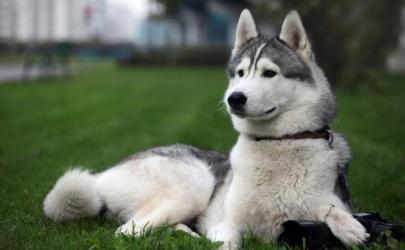 Пословицы и поговорки о собаках