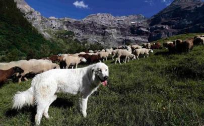 ТОП-10 самых больших собак