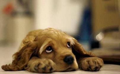 Собаки - мечтатели....