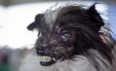 Самые уродливые собаки мира