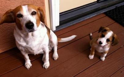 Собаки - счастливые родители
