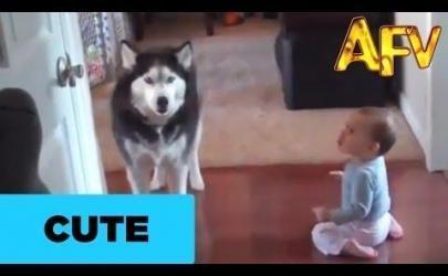 Собаки имитируют поведение детей