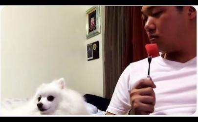 Собака - любительница арбуза
