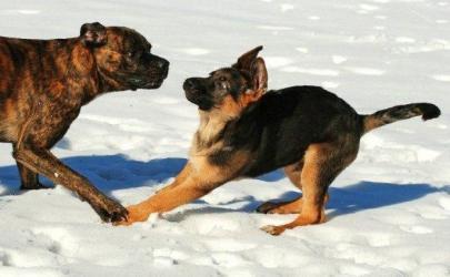 Собаки - приколисты