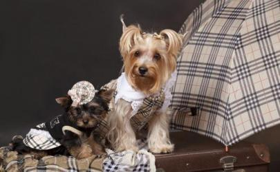 Собачки в прикольных одежках