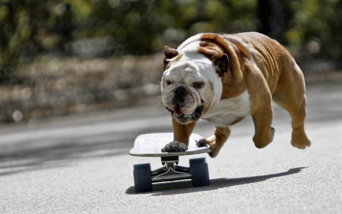 Собаки-спортсмены