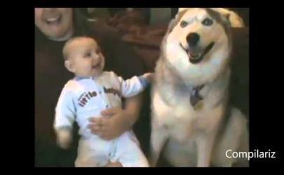 Собаки развлекают детей