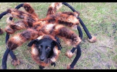 Собака-паук, прикольное видео :)