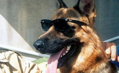 Богатые собаки