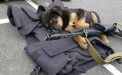 Собаки - герои мировой истории