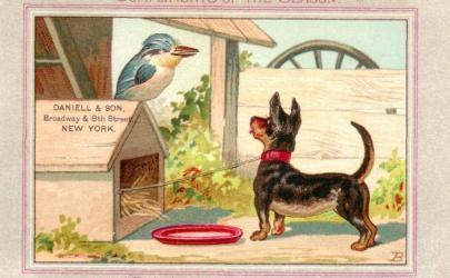 Собаки на открытках