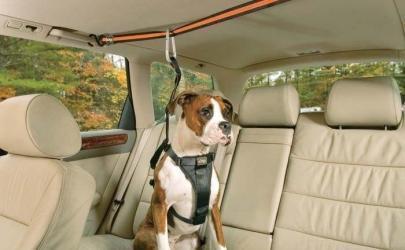 Перевозка собаки в автомобиле