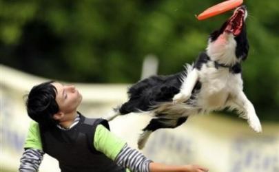 Дог-фризби: красивый собачий спорт