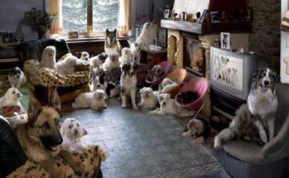 Гостиницы для собак