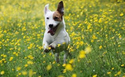 Что важно знать об уходе за собаками
