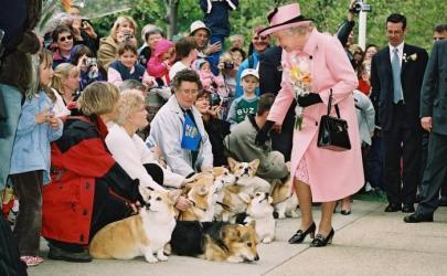 Любимая собака королевы Великобритании