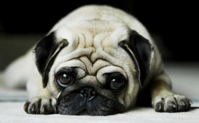 Что делать с собакой, если нужно уехать?