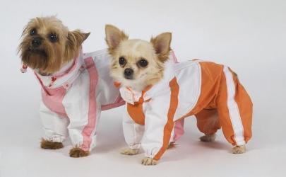 Одежда для собак - как выбрать. Выкройки и порядок шитья