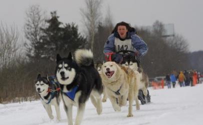 Ездовые виды спорта с собакой