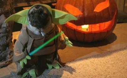 Готова ли ваша собака к Хэллоуину?