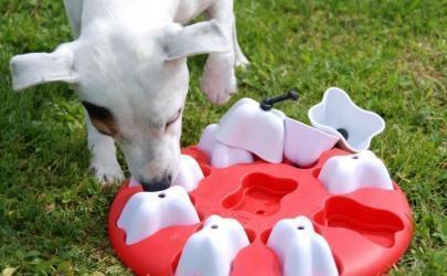Игрушки для собак