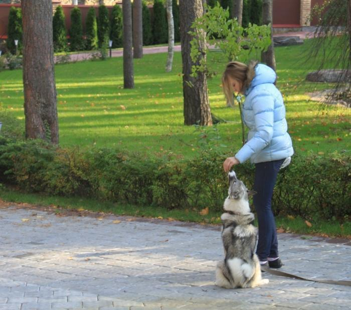 Правильное воспитание собаки