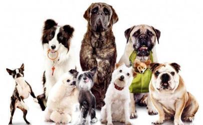 О выведении новых пород собак
