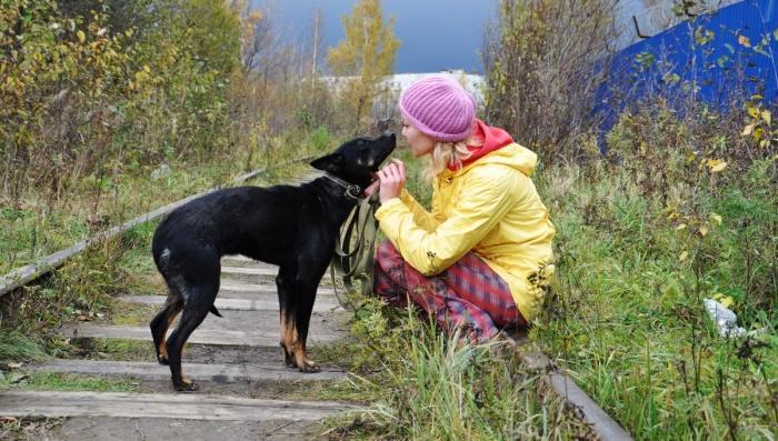 Прогулки с собаками - насколько важны и необходимы