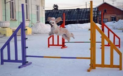Учим собаку преодолевать препятствия