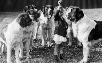 Ретро-собаки