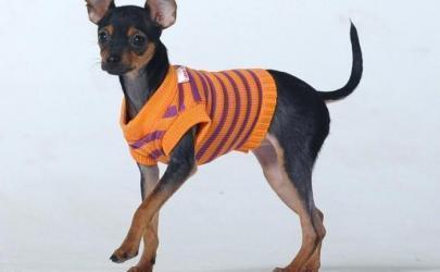 Для чего собаке одежда