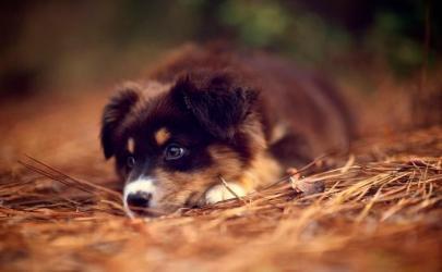 Прогулки с собакой по лесу