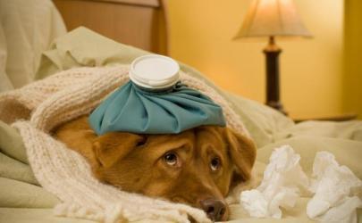 Как понять, что собака заболела