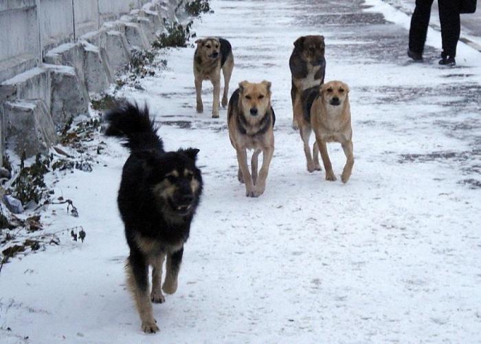 Бездомные собаки. Как не стать жертвой?