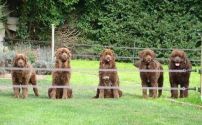 Можно ли заработать на разведении породистых собак