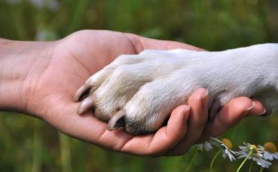 Строгость в воспитании собаки - залог безопасности