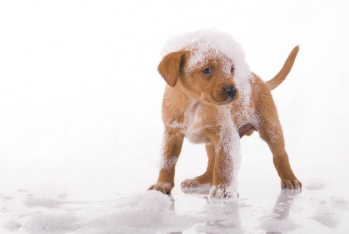 Как выбрать шампунь для собаки