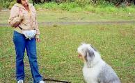 Как обучить собаку команде «сидеть»