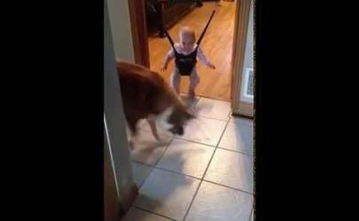 Собака своим примером учит ребенка прыгать