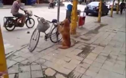 Удивительное поведение собаки