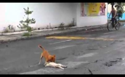 Собака, которая спасает ближнего