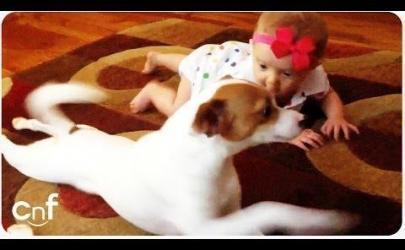 Собаки учат детей