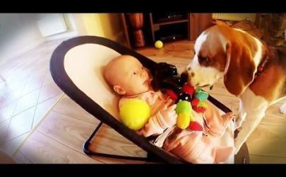 Вежливая собака
