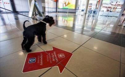 В аэропорту Нью-Йорка планируется построить отдельный терминал для животных