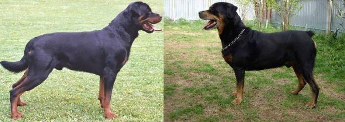 Купирование хвоста у собак