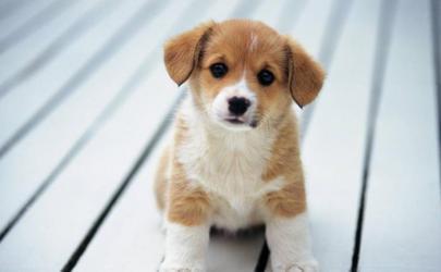 Как правильно выбрать кличку для собаки?