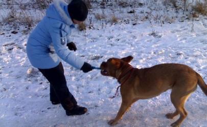 Что важно знать о воспитании собаки?